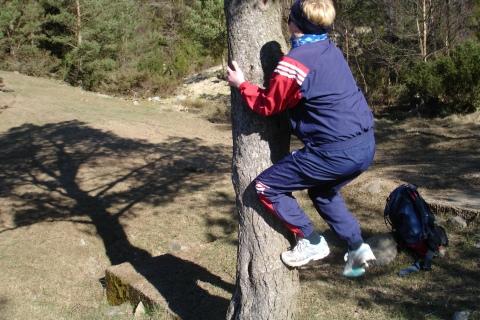 Tonje klatrerer i klatretreet ved foten avBråsteinsnuten