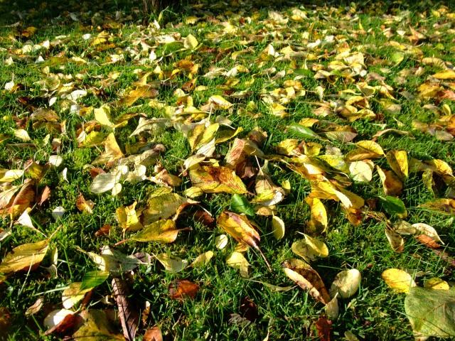 Høstblader på bakken