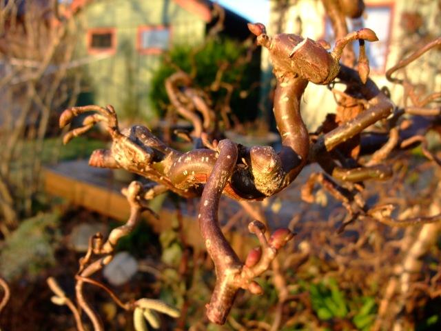 Et lite tre i hagen, en vinter uten frost