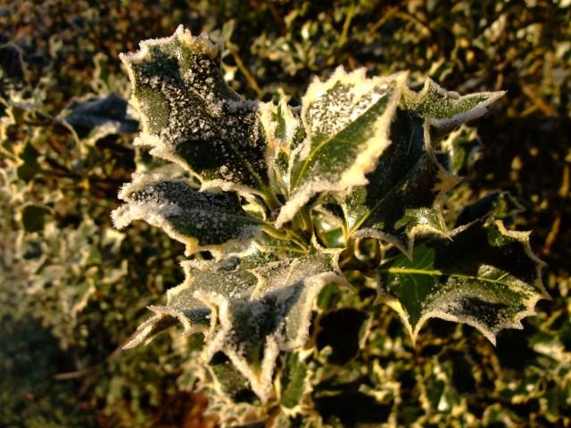 Kristorn med frost