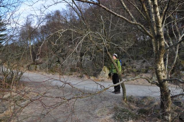 Mor gjemmer seg bak et tre, trygt på stien, heller enn å gå på den glatte isen.